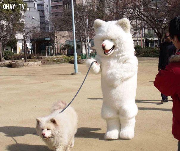 ảnh pet,thú cưng,like owner like dog,vật nuôi
