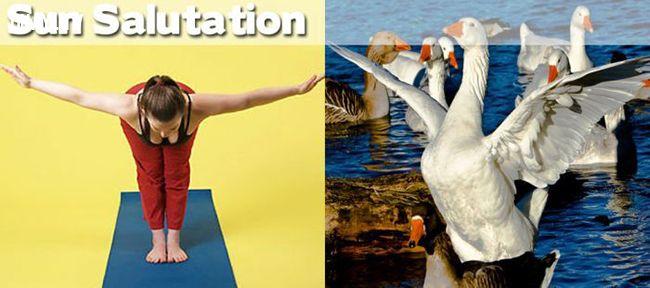ảnh động vật,tập thể dục