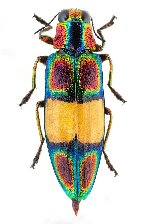 ảnh côn trùng,côn trùng đẹp,màu sắc,thế giới động vật