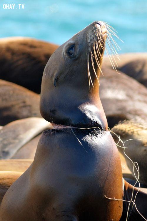 ảnh động vật,hệ sinh thái,môi trường sống,xả rác