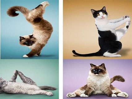 """27 hình ảnh \""""cười vỡ bụng\"""" khi loài vật tập thể dục với con người"""