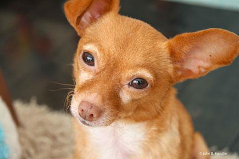 10 điều mà chú chó của bạn muốn bạn biết
