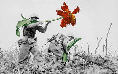 Bộ ảnh Hoa Nơi Chiến Trường bị cộng đồng phản đối gay gắt