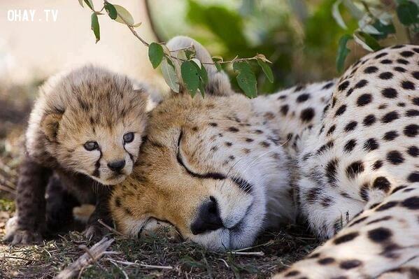 ảnh con vật,đáng yêu,biểu cảm đáng yêu