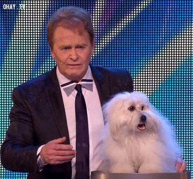 ảnh chó biết nói,britains got talent,chó,vật nuôi,chú chó wendy