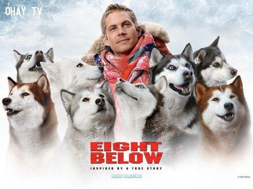 ảnh cảm động,những chú chó trung thành,chó nam cực,paul walker,video cảm động,video cảm động về loài chó,phim hay về loài chó