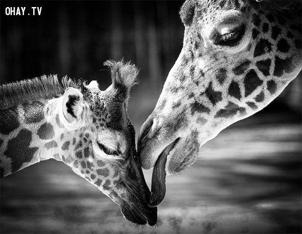 ảnh động vật,tình yêu động vật,cảm xúc của động vật,tình yêu,thế giới động vật
