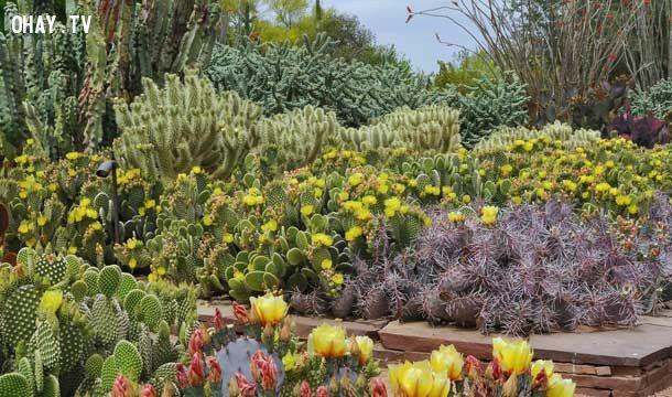 ảnh vườn cổ tích,không gian đẹp