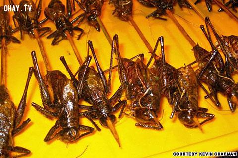 Những thực phẩm kỳ lạ ở chợ đêm Bắc Kinh
