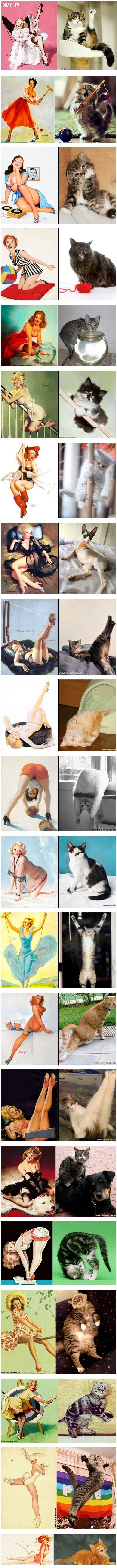 ảnh nàng mèo,mèo hài hước,vật nuôi