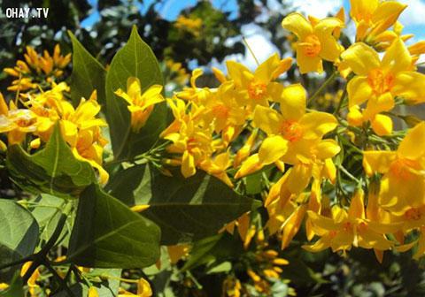 5 loại cây có hoa cực đẹp gây chết người ở việt Nam