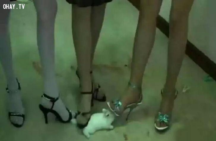 Sự việc 3 cô gái trẻ hành hung chú thỏ trắng khiến dư luận bức xúc.