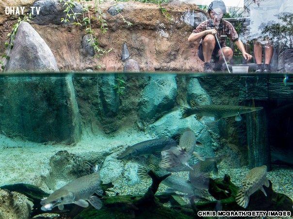 ảnh Singapore,River Safari,Amazon,hoang dã,Trường Giang,Mekong,sông lớn nhất thế giới