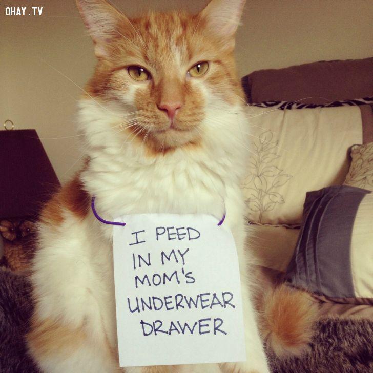 ảnh nuôi mèo,cẩn thận,vật nuôi