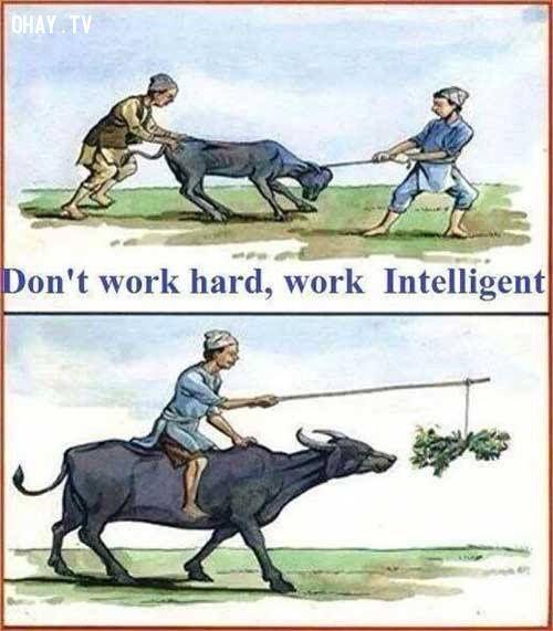 ảnh làm việc,làm việc thông minh,làm việc chăm chỉ