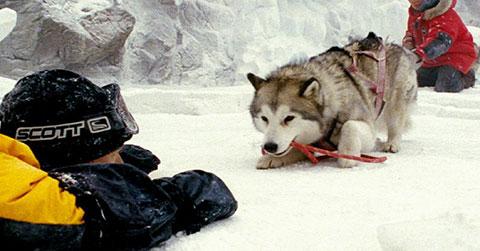 Câu chuyện cảm động về những chú chó bị bỏ lại ở Nam Cực