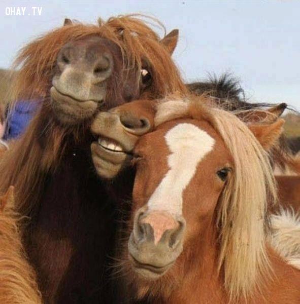 ảnh selfie,tự sướng,động vật tự sướng,động vật selfie