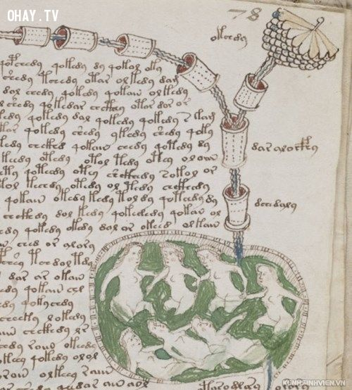 Một phần trong bản thảo Voynich