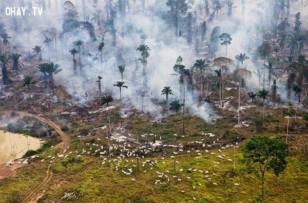 ảnh thiên nhiên,con người,ô nhiễm môi trường