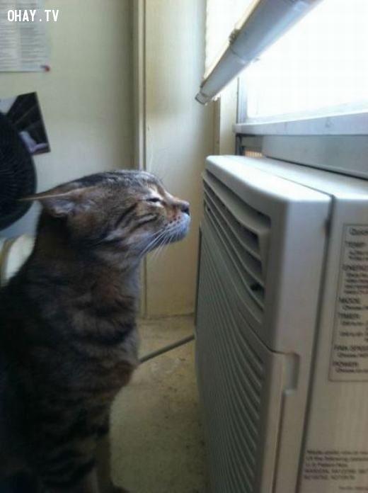 ảnh thú cưng,giải nhiệt,nắng nóng,thú cưng giải nhiệt,thú cưng tránh nóng