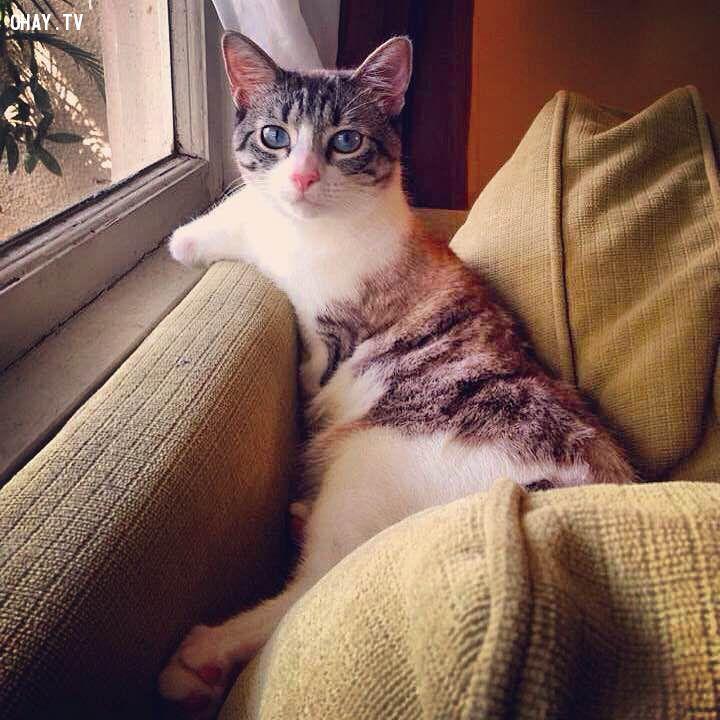 ảnh mèo,roux,chú mèo roux,chú mèo 2 chân,chú mèo hai chân,chú mèo cụt 2 chân