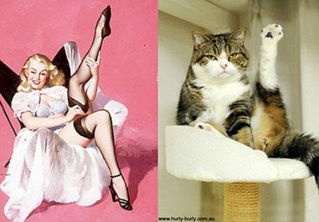 Những nàng mèo sexy nhất thế giới