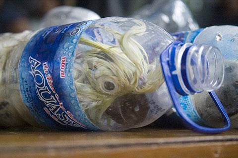 Buôn lậu vẹt mào vàng bằng cách không thể tưởng ở Indonesia