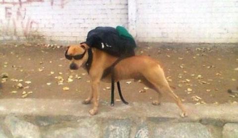 Những chú chó thích đùa