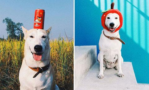 Những chú chó vui vẻ nhất quả đất