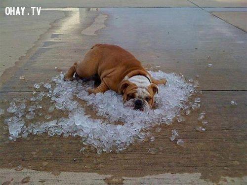 ảnh ảnh chế,ảnh chế trời nóng,ảnh chế thời tiết nóng