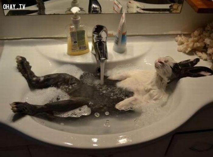 ảnh động vật,khi động vật tắm,ảnh vui động vật,ảnh vui động vật tắm