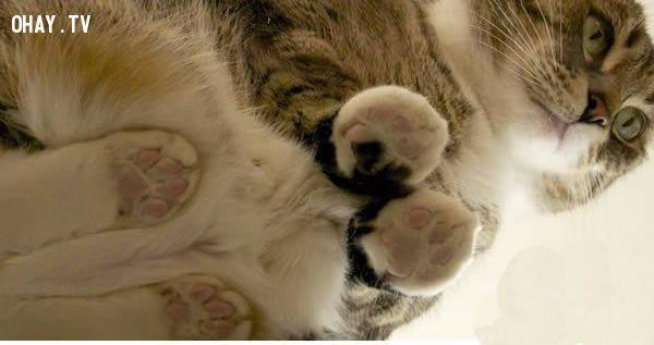 ảnh mèo,đáng yêu,vật nuôi