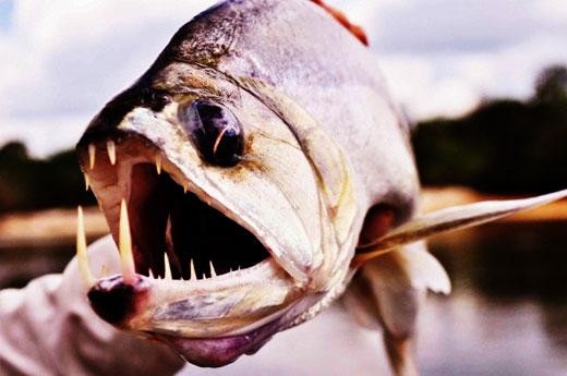 6 sát thủ trên sông Amazon, ai nhớ con #3 không?