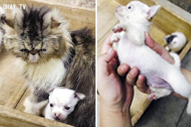 ảnh mèo đẻ ra chó,vật nuôi,chuyện lạ