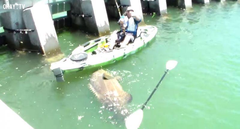 ảnh câu được cá khổng lồ,thuyền Kayak