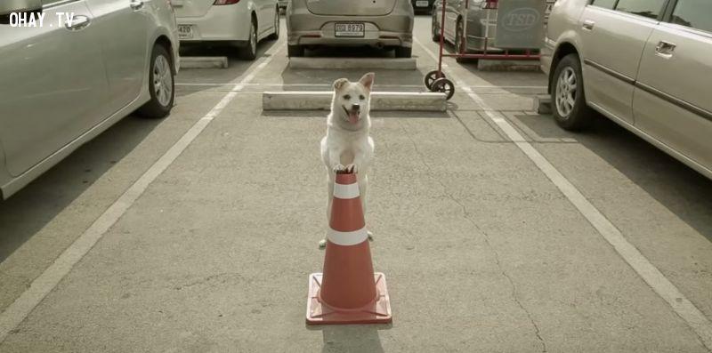 ảnh chó thông minh,chó bảo vệ chủ,quảng cáo,quảng cáo thái lan,video quảng cáo thái lan,kinh doanh,quảng cáo hay