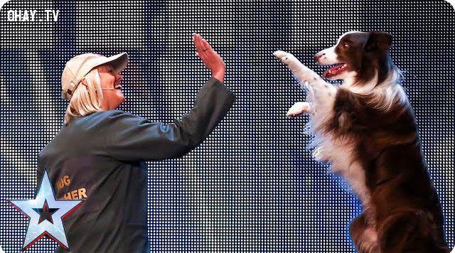 ảnh Chú chó Matisse,chó tham gia got talent,chú chó tại Britain got talent