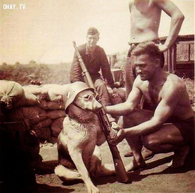 Một chú chó đứng gác cùng với lính Đức (năm 1940).