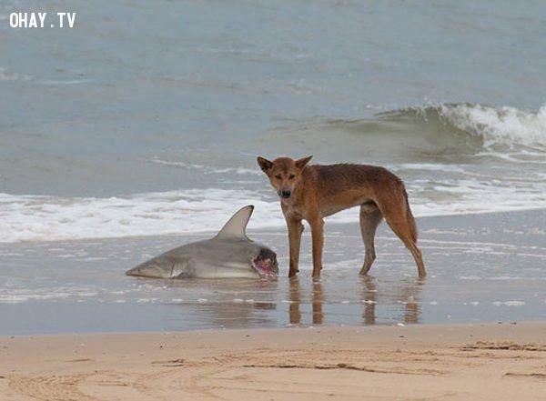 ảnh nước úc,australia,đáng sợ nhất hành tinh,du lịch úc