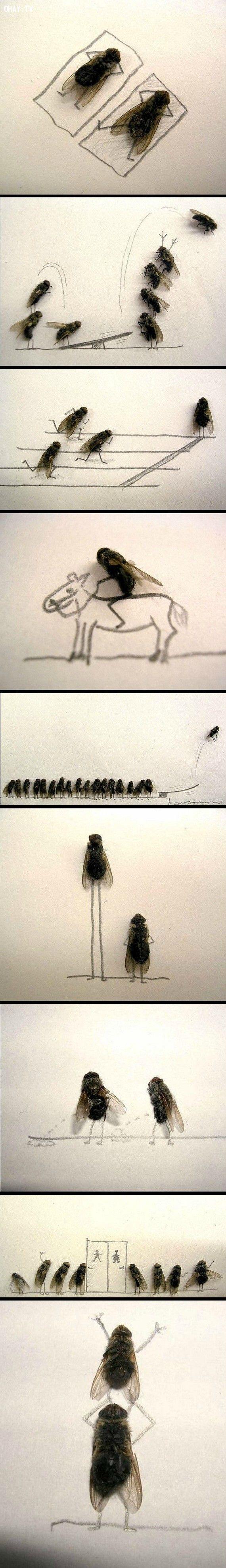 ảnh hình ảnh ruồi sáng tạo,ruồi sáng tạo,ruồi chết,sáng tạo,hình ảnh sáng tạo