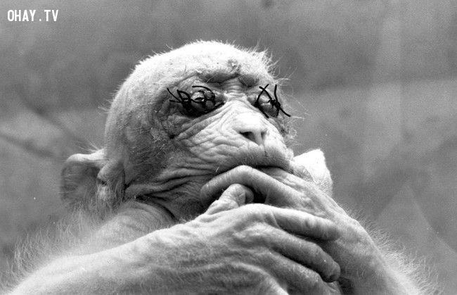 ảnh nhà khoa học điên,vô nhân đạo,thí nghiệm khoa học,thí nghiệm,vô nhân tính