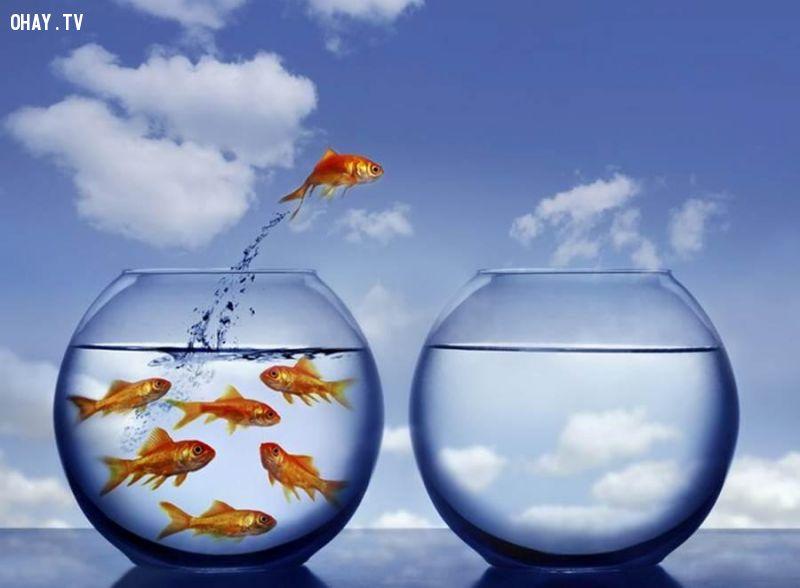Muốn thành công, hãy bước ra khỏi vùng thoải mái!