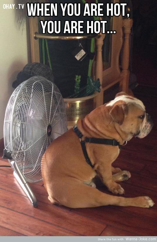 ảnh mùa hè,nóng,giải nhiệt mùa hè