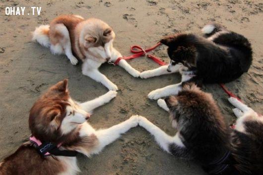 ảnh chó,tinh nghịch,làm trò,đùa giỡn,chó thích đùa,chó hài hước