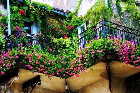 Những ban công với đầy hoa mà bất kỳ cô nàng nào cũng thích