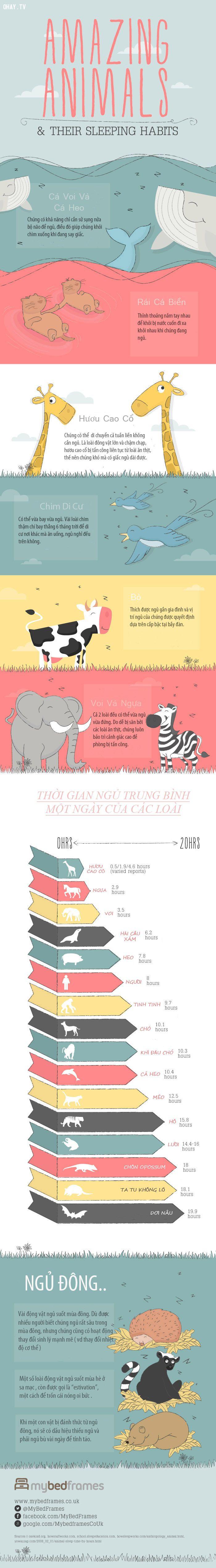 ảnh infographic,infographic về động vật,động vật,thói quen của động vật,thói quen kì lạ