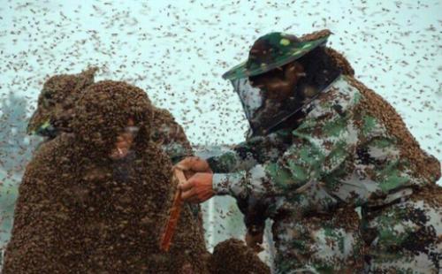 ảnh nuôi ong,chuyện lạ,kỷ lục,trung quốc