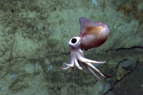 11 bức ảnh cực dễ thương của các sinh vật dưới đáy biển