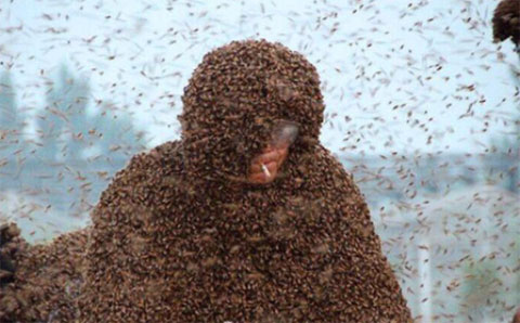 Trung Quốc: 100kg ong phủ lên người vẫn hút được thuốc lá bình thường