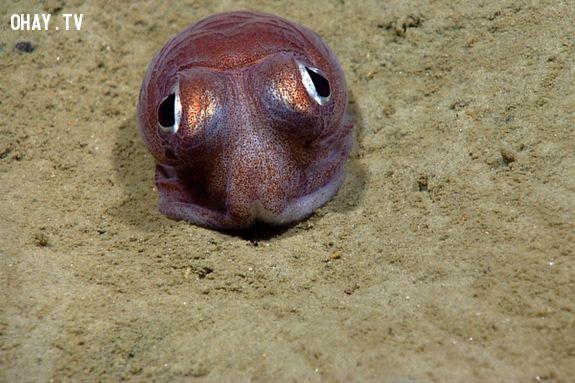 ảnh đại dương,dễ thương,động vật,động vật dễ thương,sinh vật biển dễ thương
